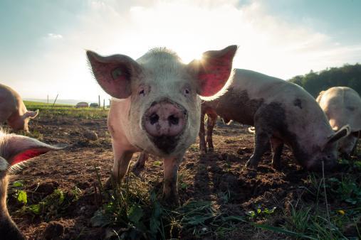 10 Gründe, warum dein Schatz ein Schwein ist
