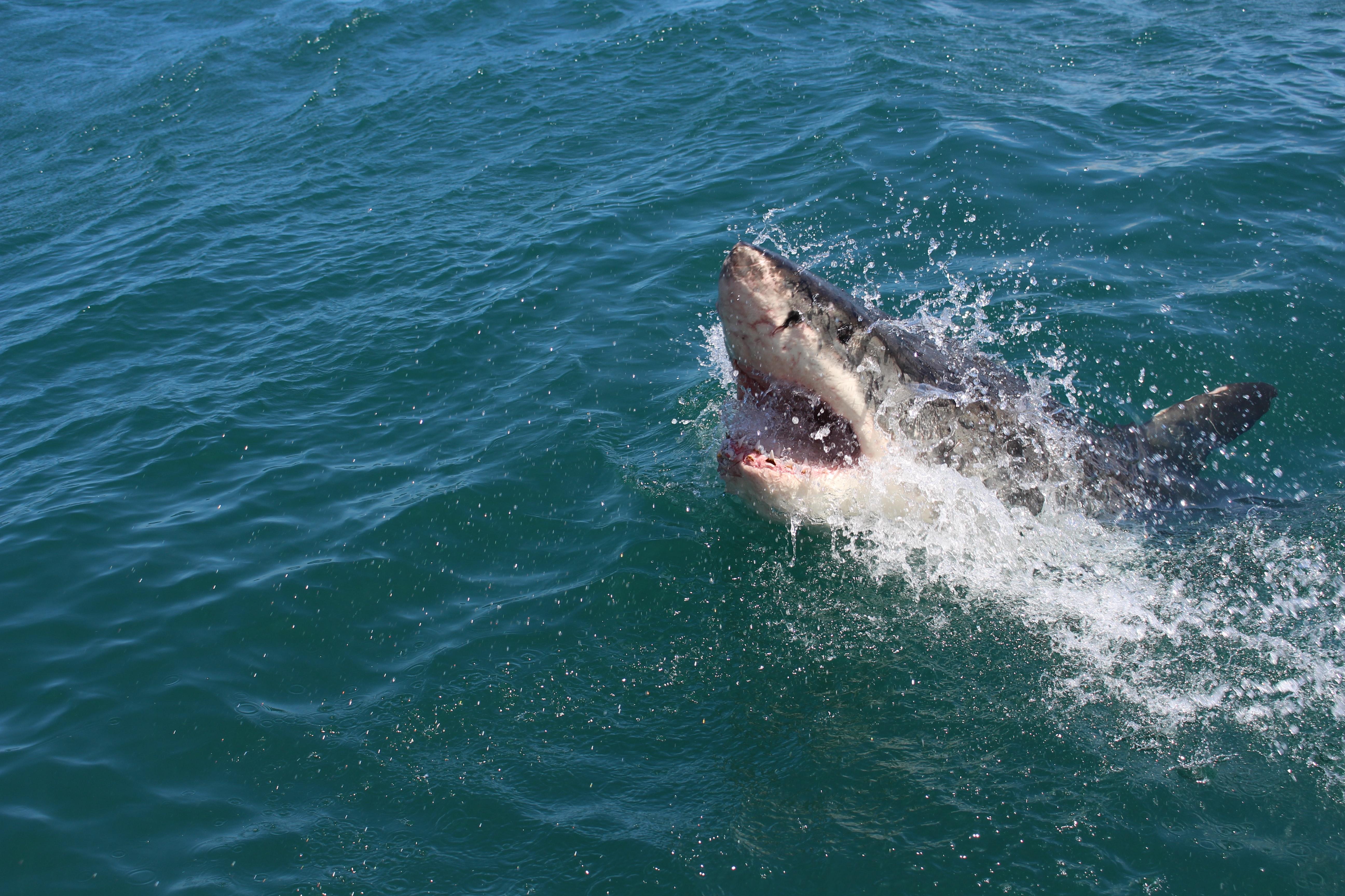Hai zu 12 Jahren Gefängnis verurteilt wegen Beißangriff