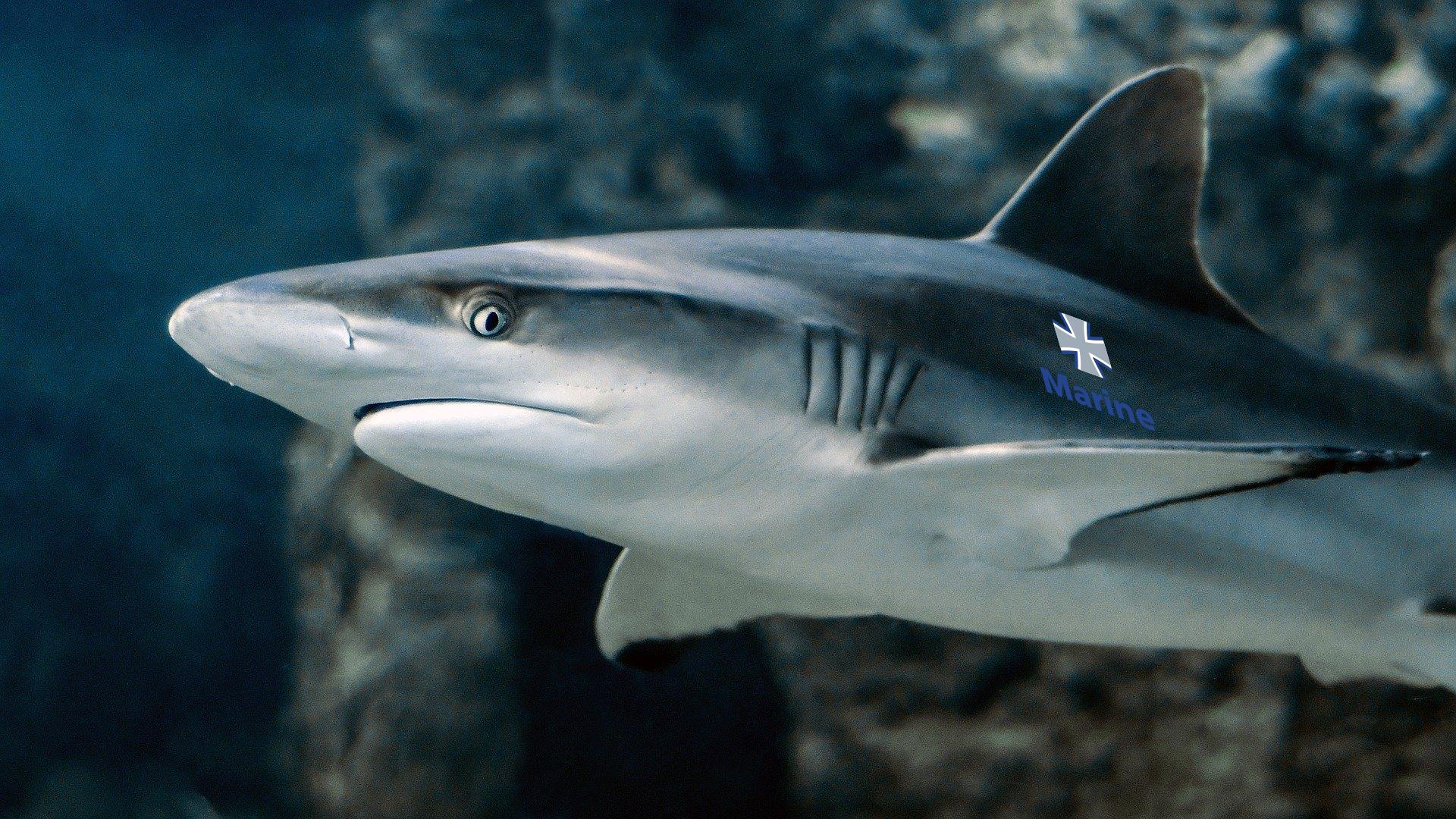 Bundeswehr will Regiment Tigerhaie einführen um Russische Kampftaucher in der Ostsee abzuwehren
